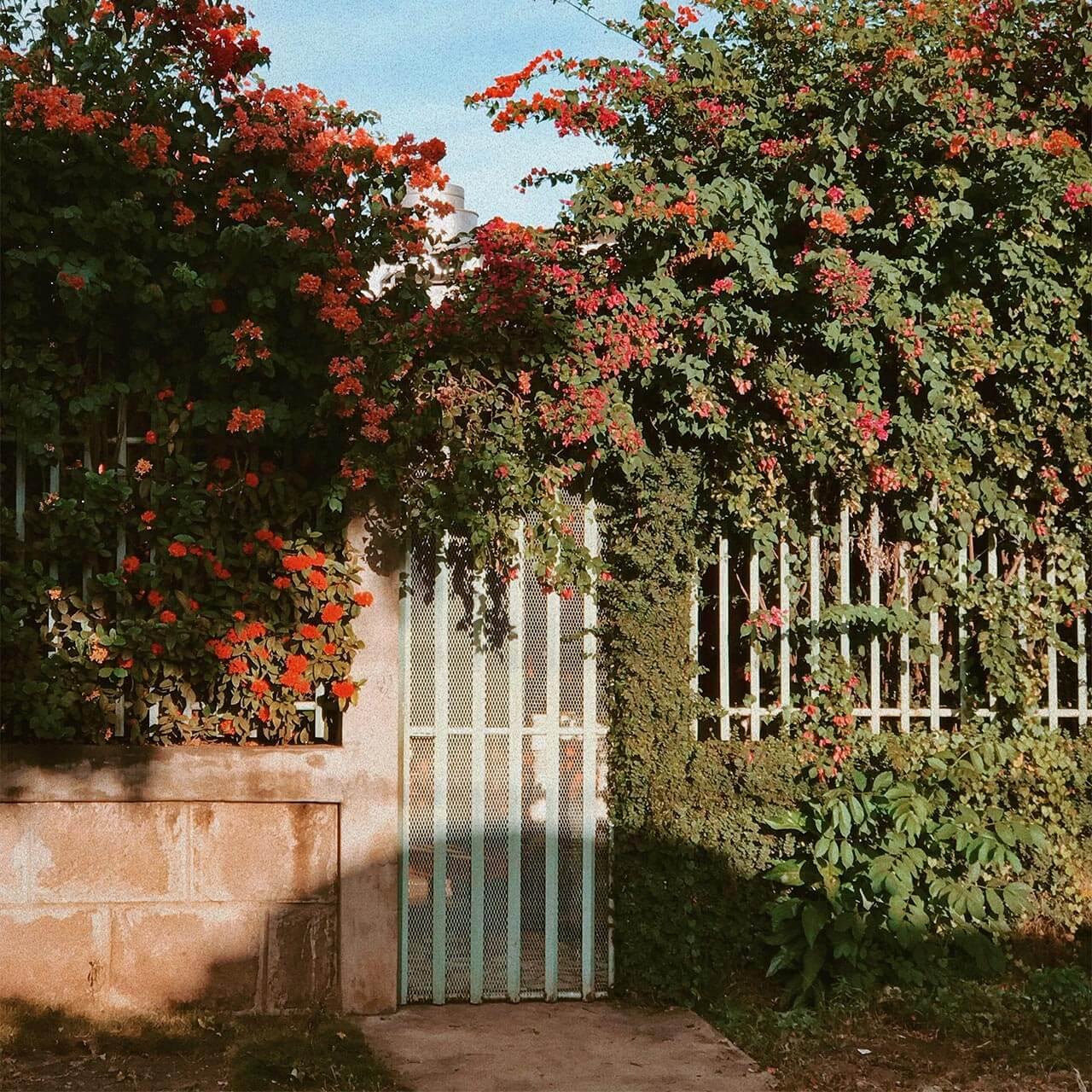garden4_pic19